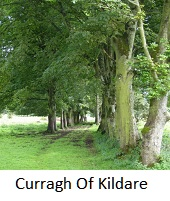 Curragh Of Kildare